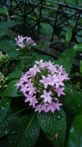 ☆雨後の小庭☆