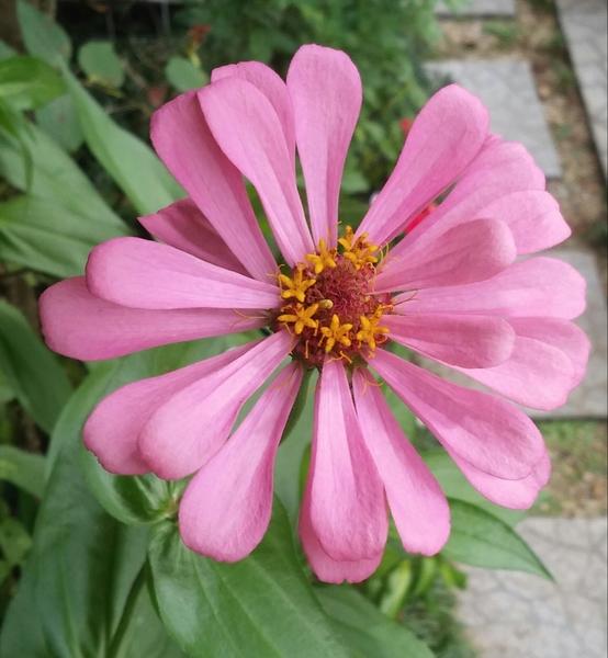 種から咲かせちゃったもんね(^-^)v
