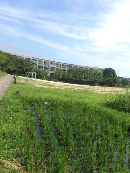 地域小学校の田んぼ