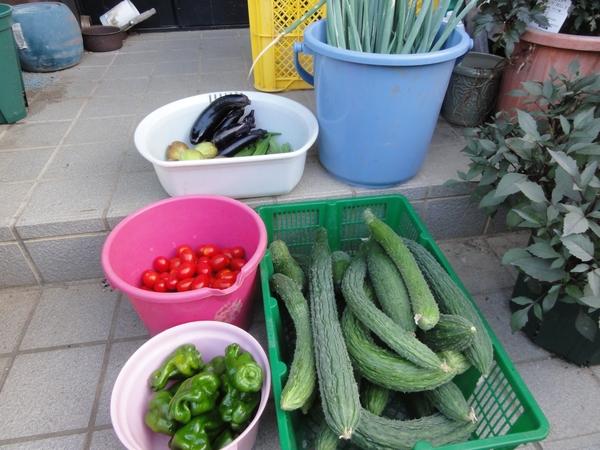 2日ぶりの収穫物