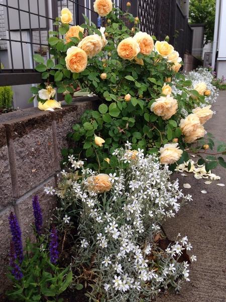 春〜初夏の庭