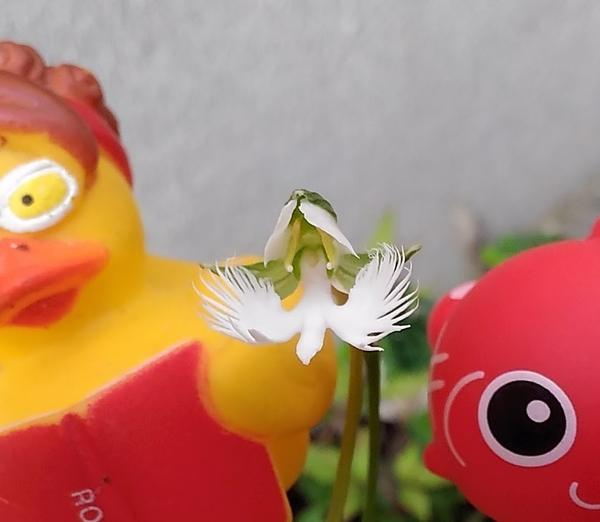 鷺ちゃん一羽目飛来でございます~