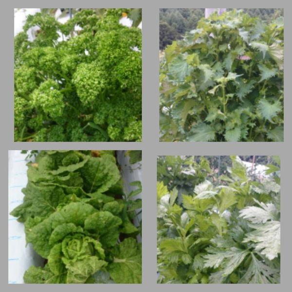 ウチの家庭菜園
