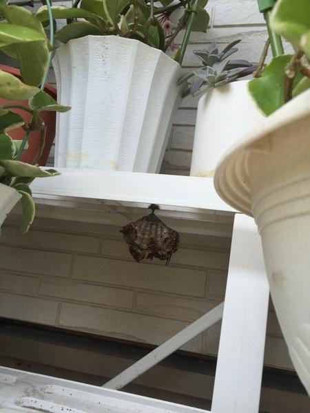 蜂の巣が...