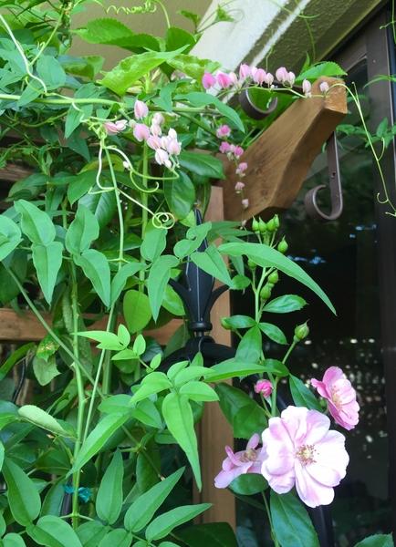 植物と虫(虫の写真はありません)