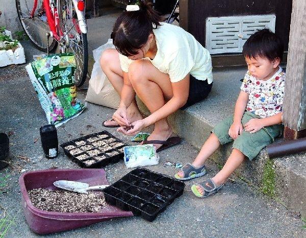 タイ野菜の種まき
