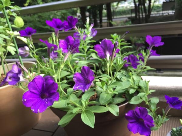 いま元気な植物