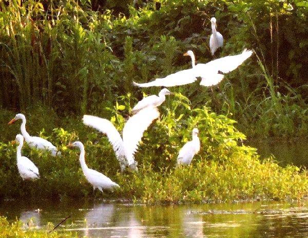 今日の100分の3「白鷺の群れ」