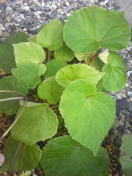 この植物なんでしょうか?