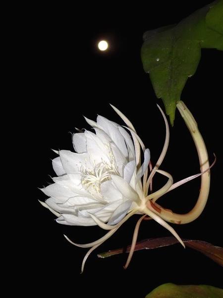 満月の夜に・・・