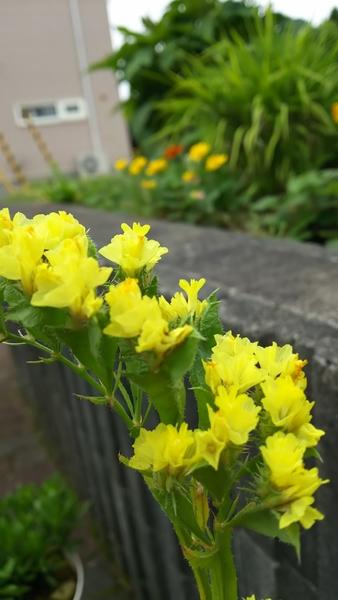 咲きました~ いっぱい発芽しました!