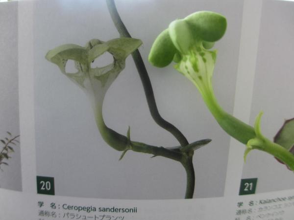 ノーマル植物展覧会・その2