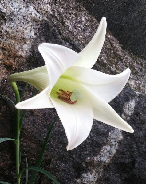 永遠の白い約束~(133)~
