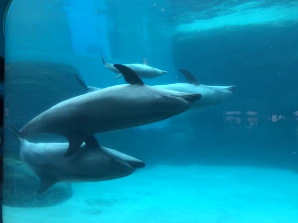 名古屋港水族館に行きました。