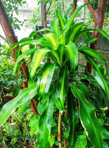 夏は屋外の観葉植物