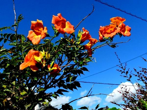 青空に咲く花