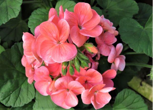 丸く固まり花模様