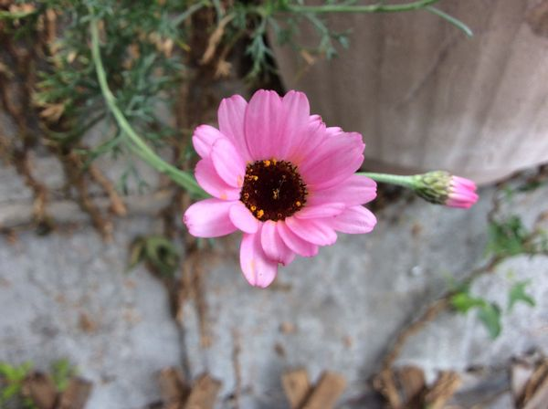 今日の花🎀   咲いたよう☺️③