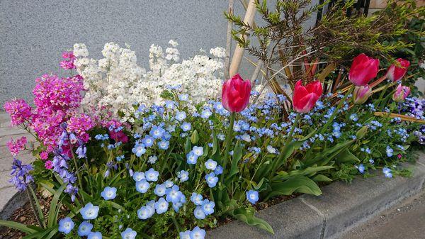 春の花壇全盛期♪