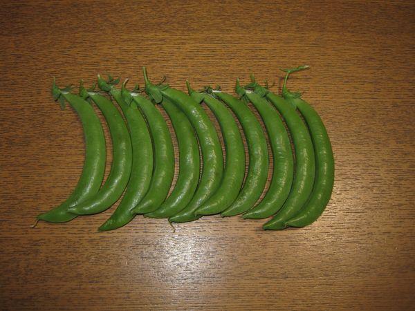 スナップエンドウ3回目の収穫