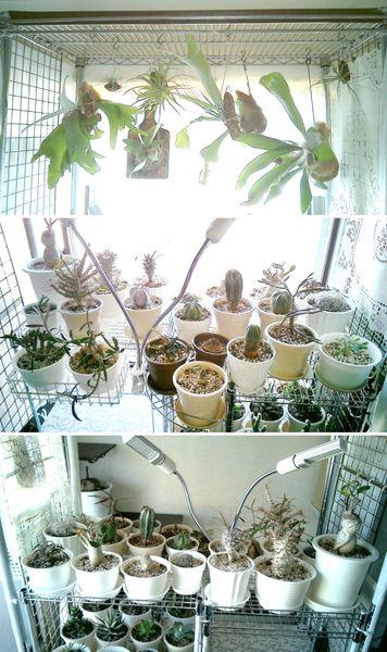 現在の可動式園芸棚2