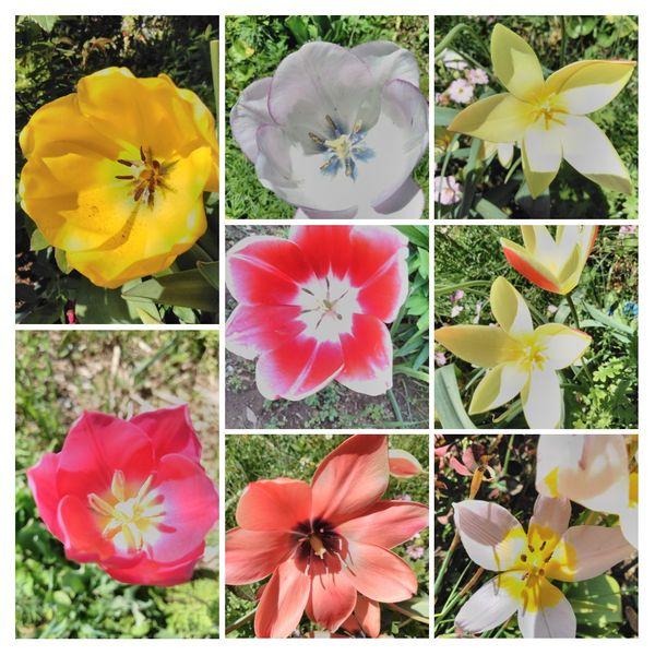 庭の花  お日様浴びて  深呼吸