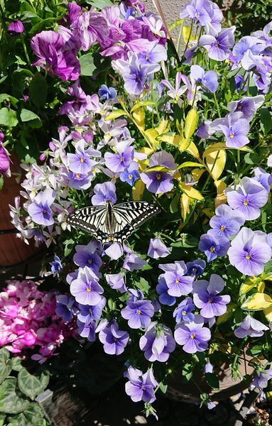 蝶々も大忙し