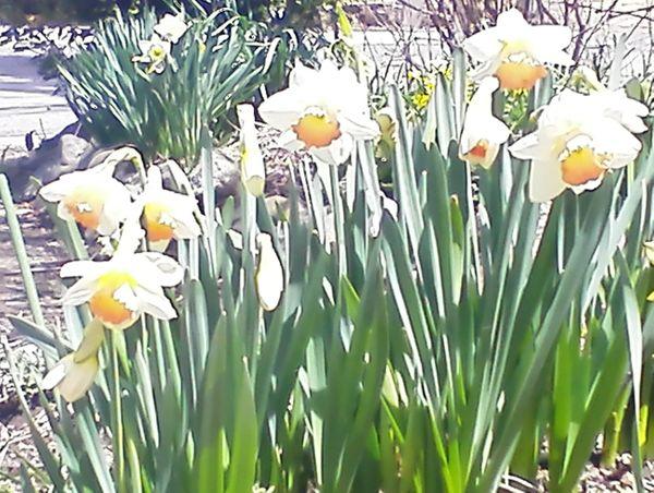 2020年・春の庭💮4月19日