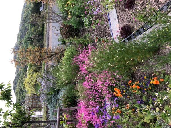 今日の裏庭