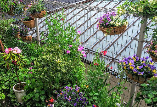 雨の日の庭🎵