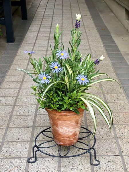 今日のお花🌼②