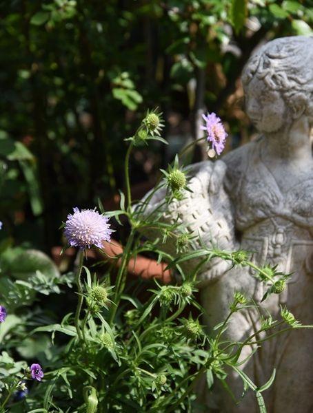 草花が咲きだすと庭が賑やかになって来ます。
