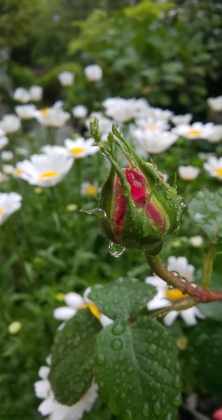 サプライズわらしべ🎁と雨上がりの庭