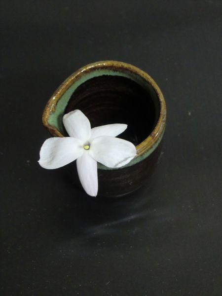 ジャスミン開花