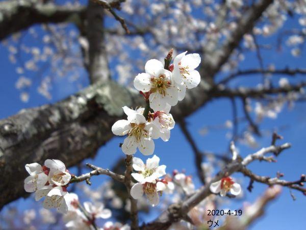 桜が咲く時だというのに・・・