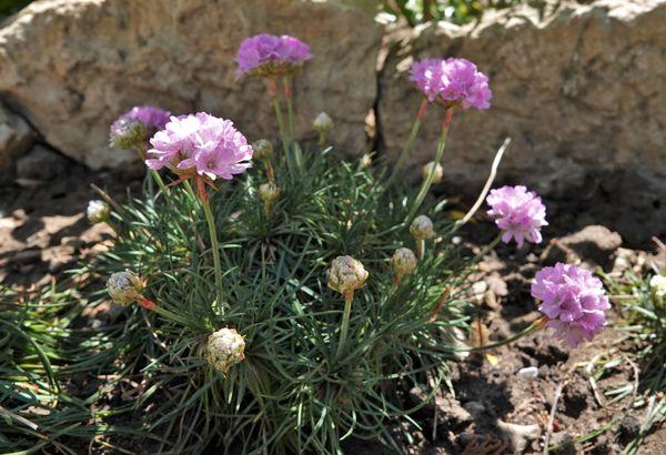 玉咲きの花