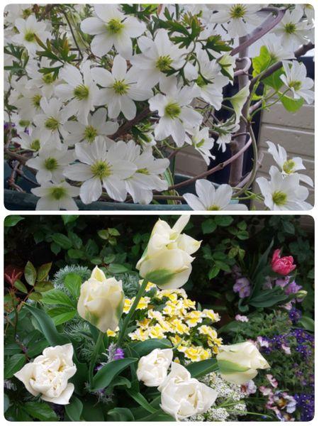 今日と昨日のお花たち