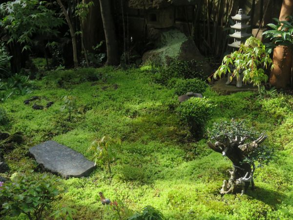 朝露に輝く苔庭