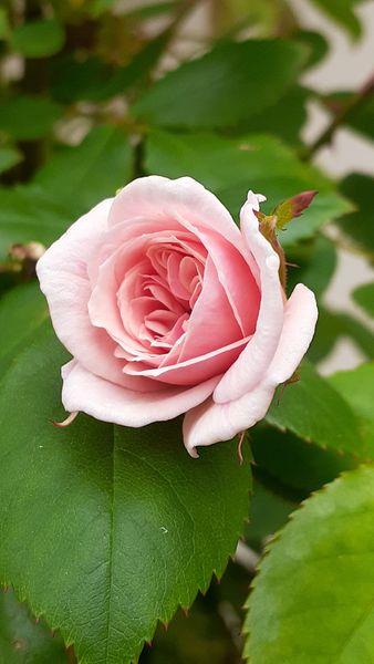 ふくおかルーバルガーデン2~春の🌸🌿庭たより…どんよりの曇り空☁️どんよりのニュ...