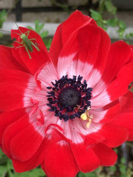 我が家の庭の花
