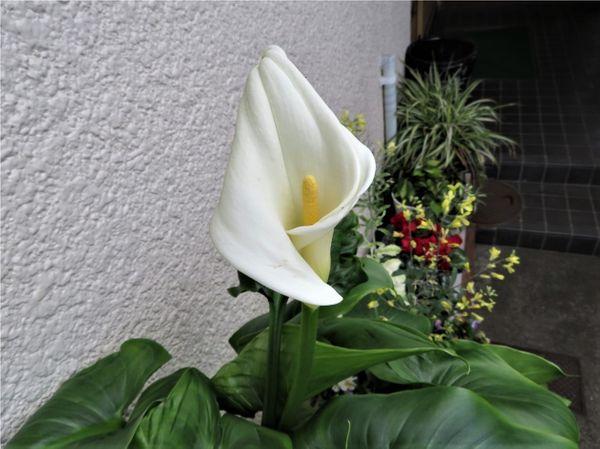 🌻今日の花たち🌻その61