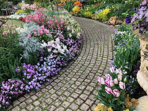 雨上がりの庭のお手入れ