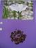 亜麻色のリナム~ステキなお花