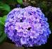 🌱紫陽花の挿し木🌱