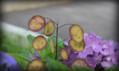 《7/29-3紫陽花》