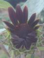 開花の最中🎵