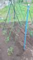 友人宅庭だより🌱野菜畑