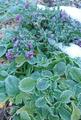 霜の朝❄2 生存確認