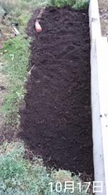 わすれな草  ブルームッツ種から    地植えの準備