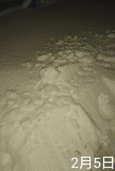 ①ネモフィラ2色とリムナンテス🌱こぼれ種の観察 2019秋〜 雪⛄